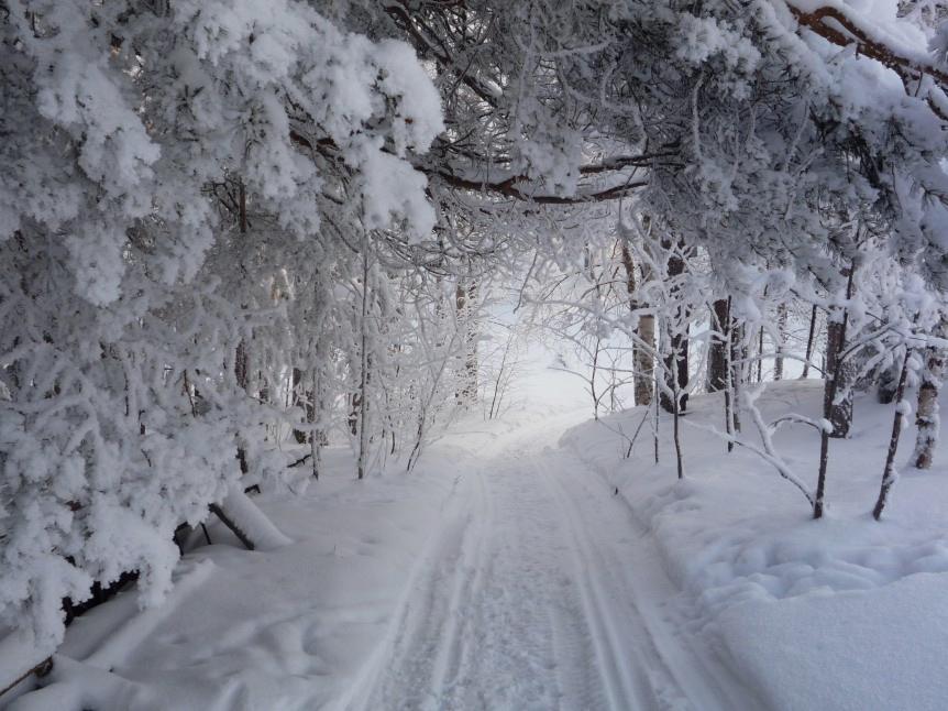neige-sous-bois-862×646